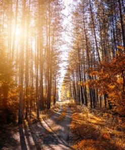 sendero con sol entre los arboles