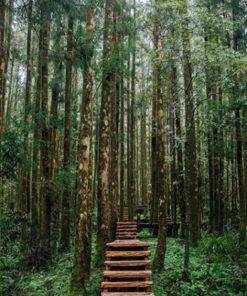 sendero en medio del bosque