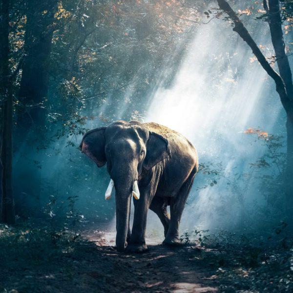 fotomural elefante